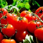 Genetically modified products – Boon or bane?