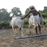 Farmer Suicides in India – What needs to be done?