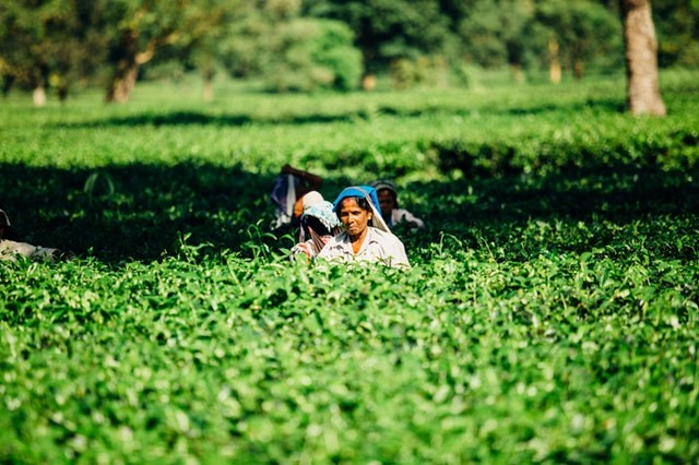 doubling farmers' income by 2022