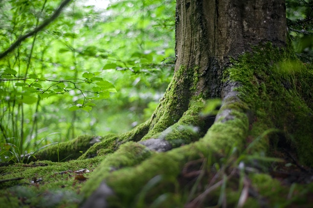Why is earth losing its greenery
